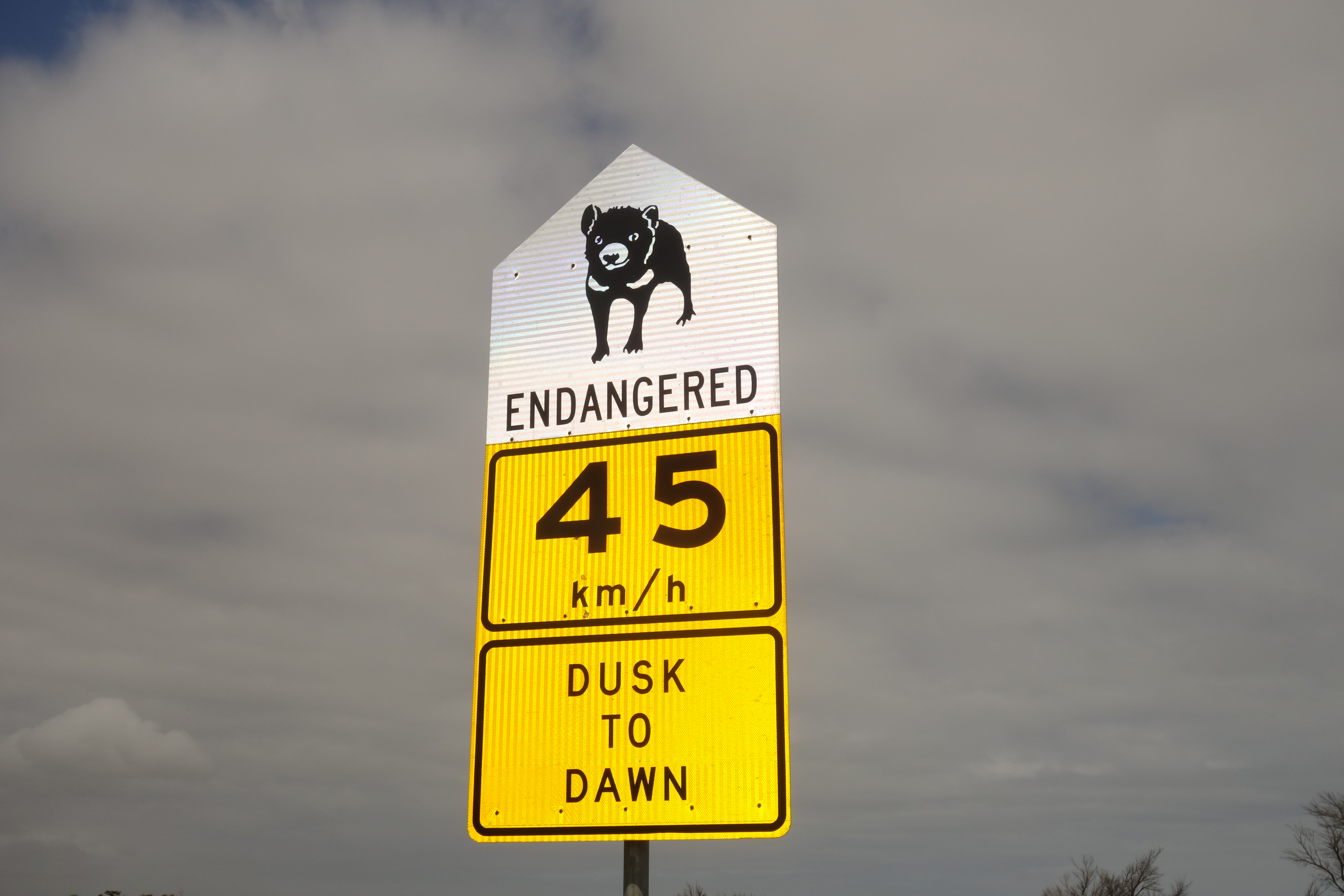 Road sign with picture of Tasmanian devil, endangered, 45 km/h speed limit dusk to dawn