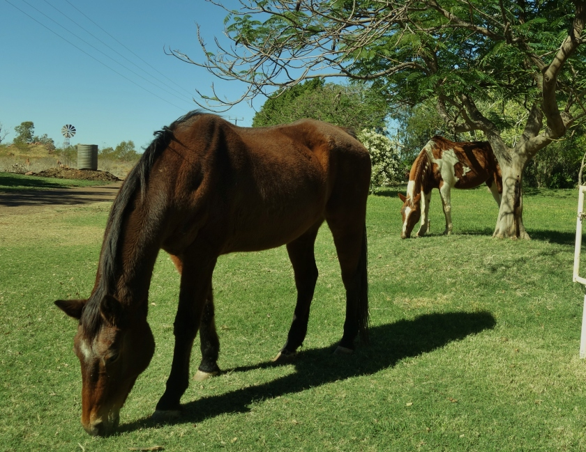 Two horses grazing showing the possibility of uses horses or other animals as lawnmowers.  Windmill, tank and trees in the background.